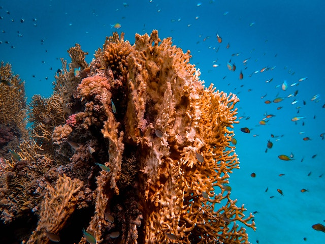 Brown coral reef. Climate change leads to bleaching of reefs which will affect fish production and further food security.
