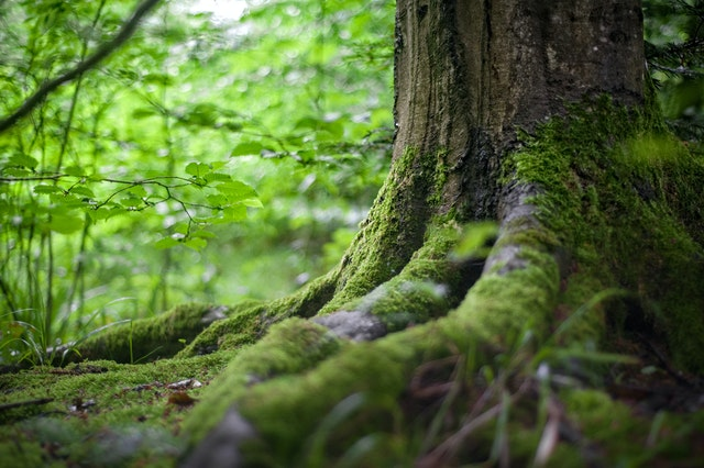 Image of a tree trunk and green environment